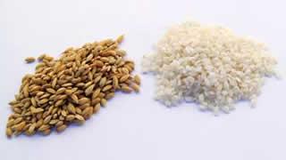 variedades-de-arroz